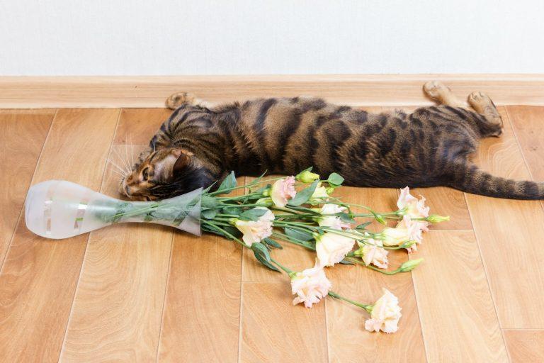 Choosing Flooring for Pets